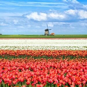 guide de voyage Pays-Bas - ENG
