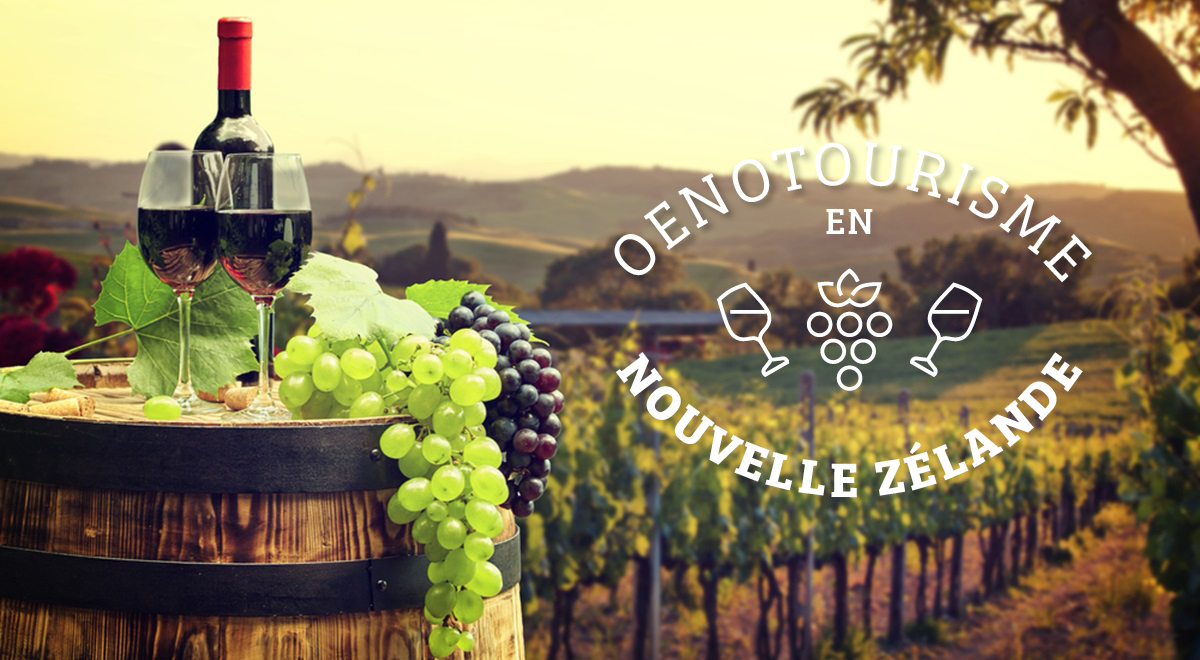 Oenotourisme en Nouvelle- Zélande :  «Des vignes au pays des All Blacks»