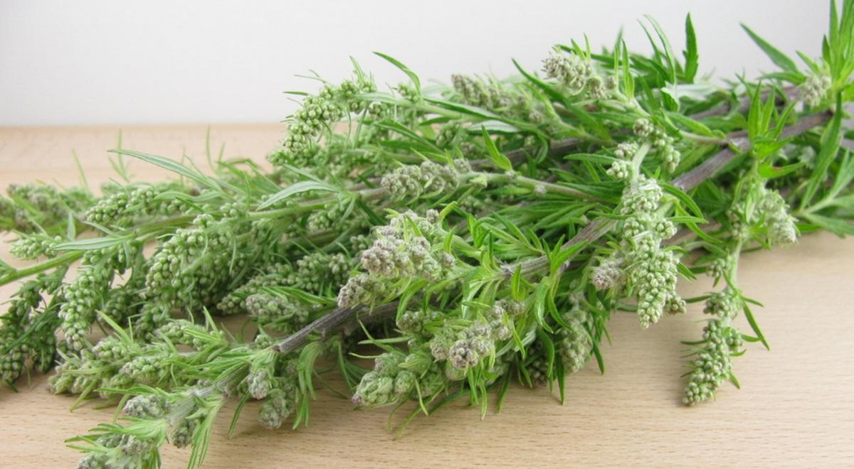Quelles sont les plantes hallucinogènes et drogues ancestrales ?