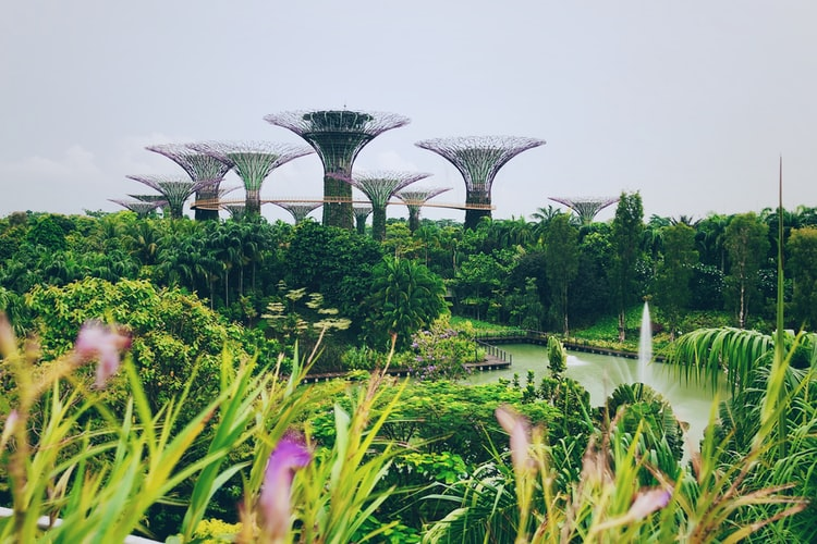 Singapour: climat et petits plus