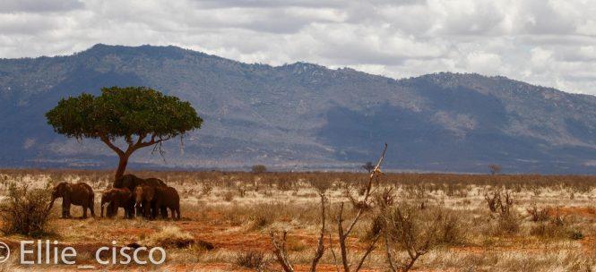 Vous cherchez une destination idyllique, le Kenya est fait pour vous!