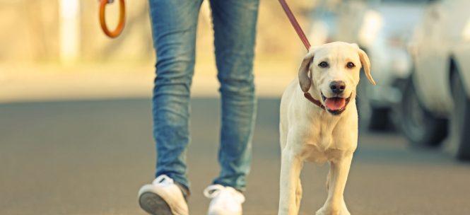 Vivre avec son chien en ville : Toulouse en tête du classement !