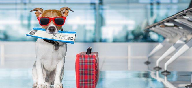 Voyager en avion avec son animal : ce que disent les compagnies aériennes !