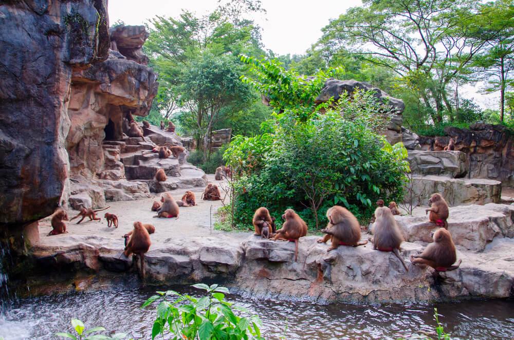 visiter singapour : parcs naturels