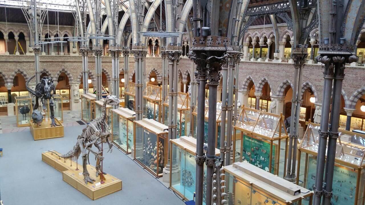 Musée d'histoire naturelle de l'université à Oxford