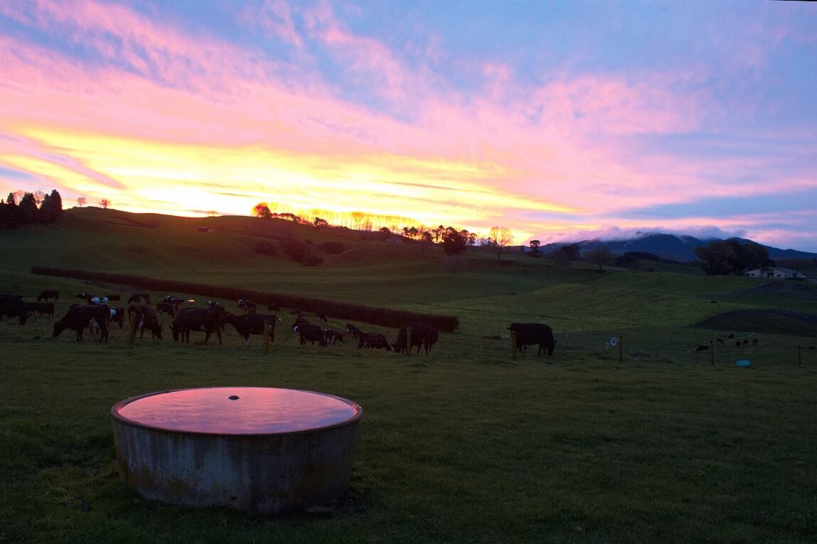 Un mois et demi en ferme laitière